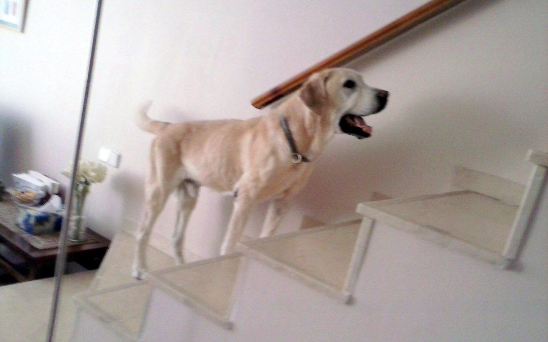 Reiki y perros: Luca quiso vivir