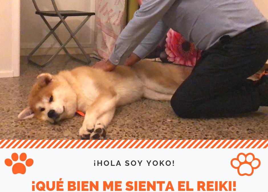 ¿Quieres ayudar a tu perro a relajarse? Con Reiki, los perros se relajan mucho